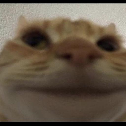 Reaction profile avatar