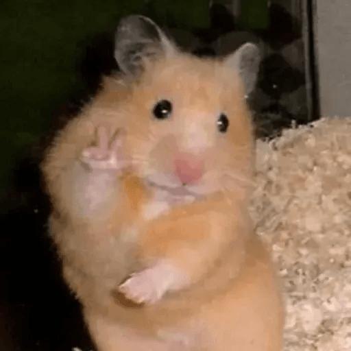 Hamster - Sticker 29