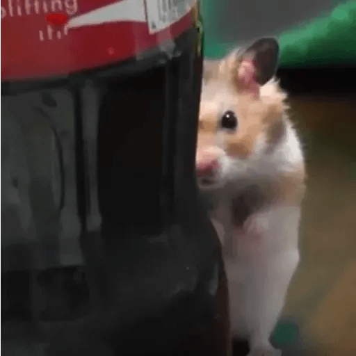 Hamster - Sticker 25