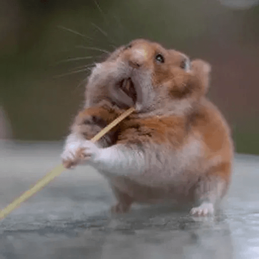 Hamster - Sticker 28