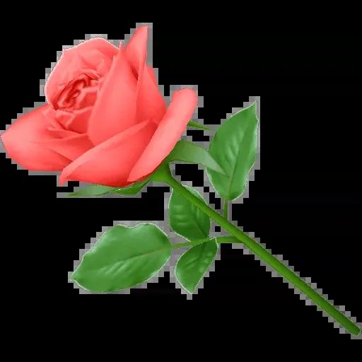 flower - Sticker 12