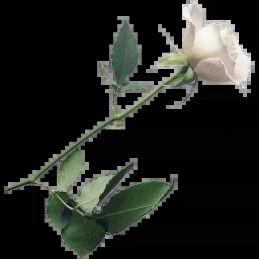 flower - Sticker 27