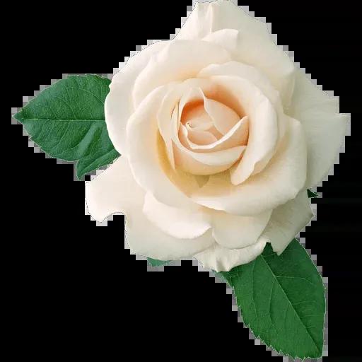 flower - Sticker 8