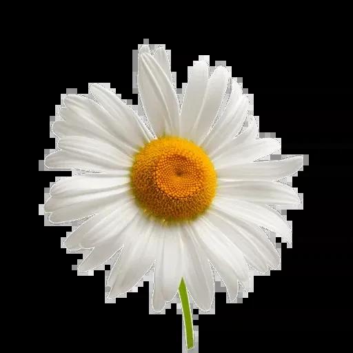flower - Sticker 6