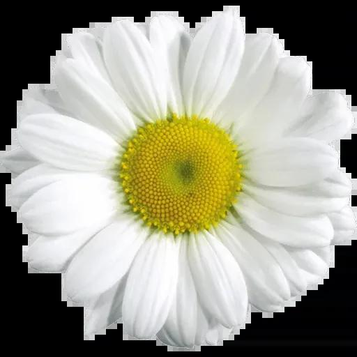 flower - Sticker 11