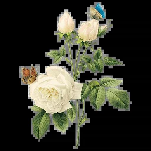 flower - Sticker 24