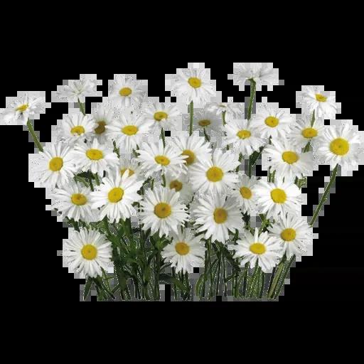 flower - Sticker 10