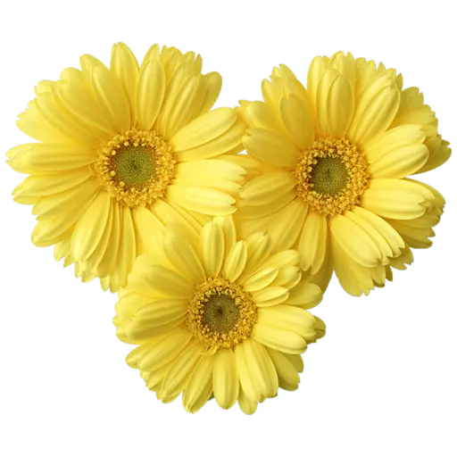 Yellow Flowers @ykinanah - Sticker 3