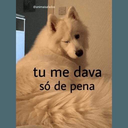 AnimaisSafados - Sticker 18