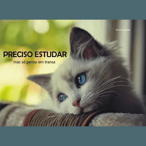 AnimaisSafados - Sticker 15