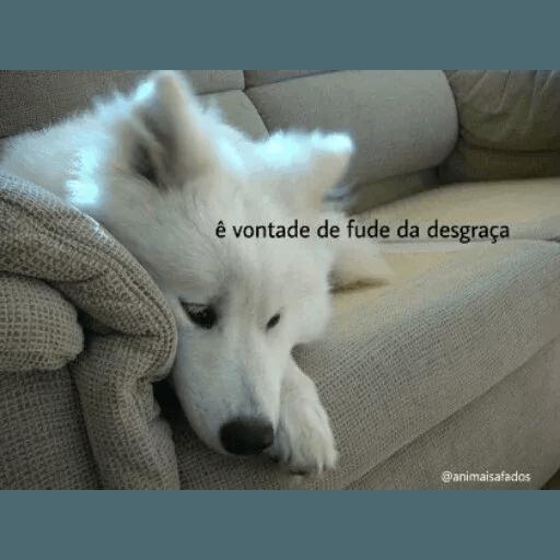 AnimaisSafados - Sticker 3