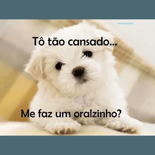 AnimaisSafados - Sticker 19