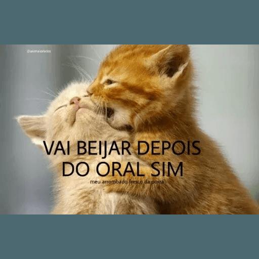 AnimaisSafados - Sticker 22