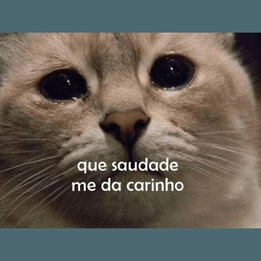 AnimaisSafados - Sticker 30