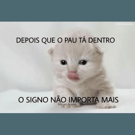 AnimaisSafados - Sticker 21