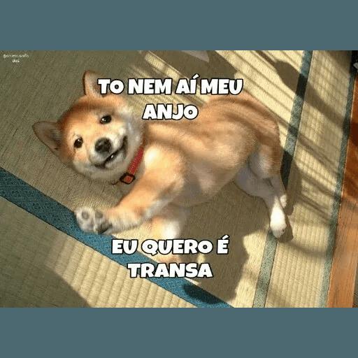 AnimaisSafados - Sticker 23