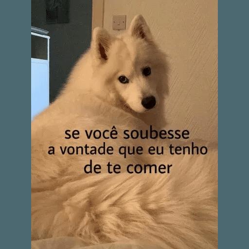 AnimaisSafados - Sticker 17