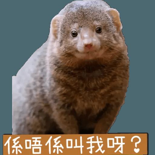 蛇獴救港 - Sticker 7