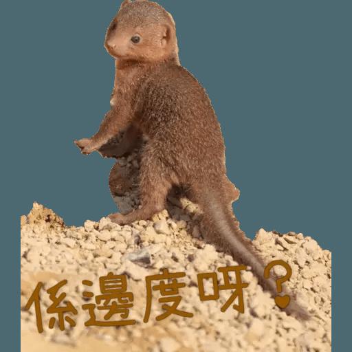 蛇獴救港 - Sticker 9