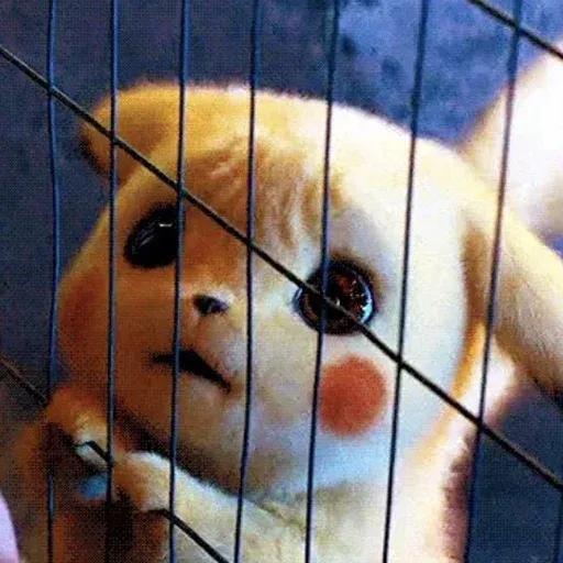 Pikachuwu - Sticker 11