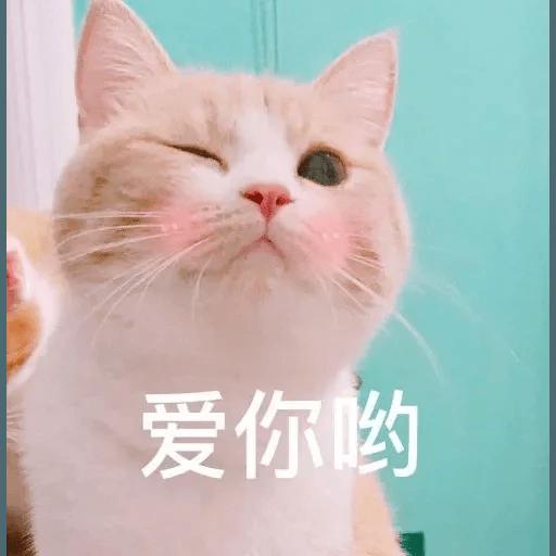 Cats? - Sticker 4