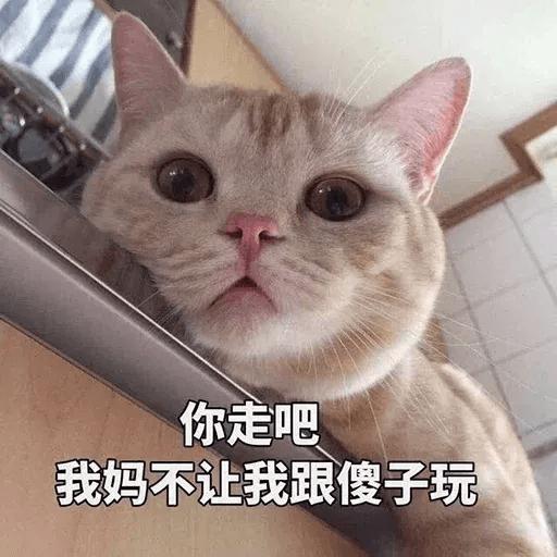 Cats? - Sticker 12