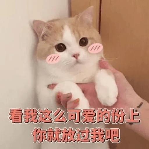 Cats? - Sticker 6