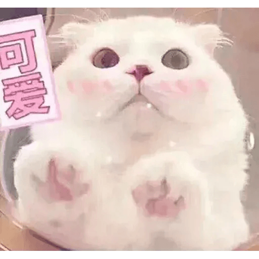 Cats? - Sticker 10
