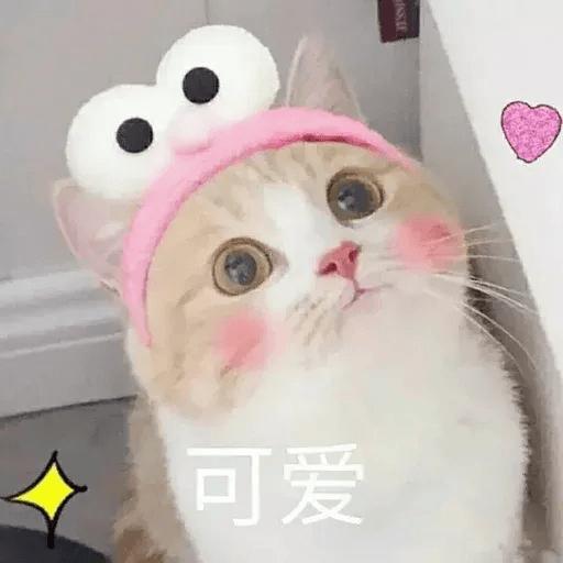 Cats? - Sticker 7