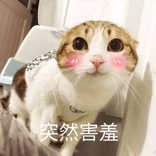 Cats? - Sticker 11