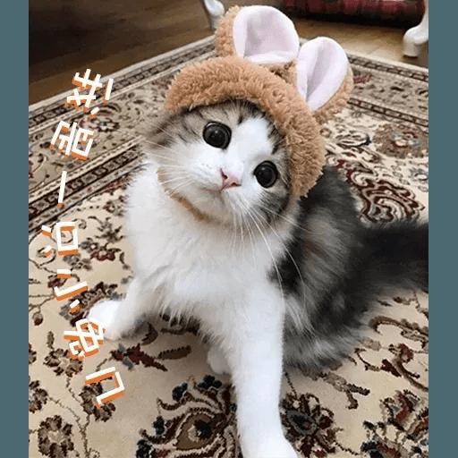 Cats? - Sticker 17