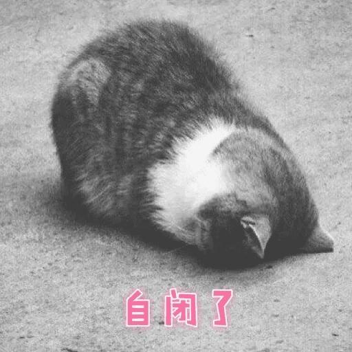 Cats? - Sticker 29