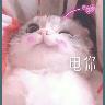 Cats? - Tray Sticker