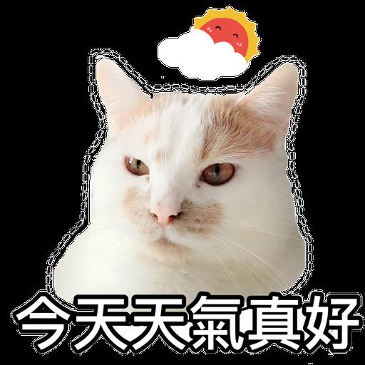 Cute cat - Sticker 12