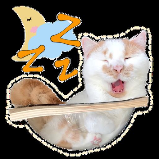Cute cat - Sticker 11