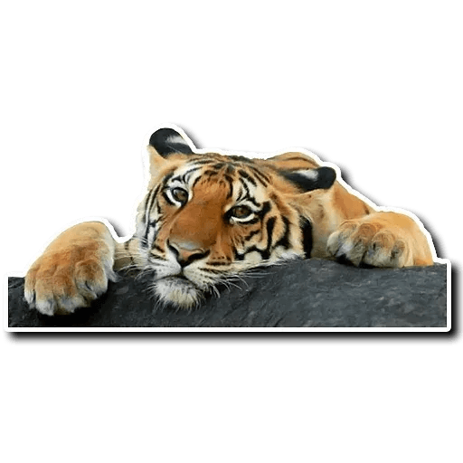 Tiger - Sticker 3