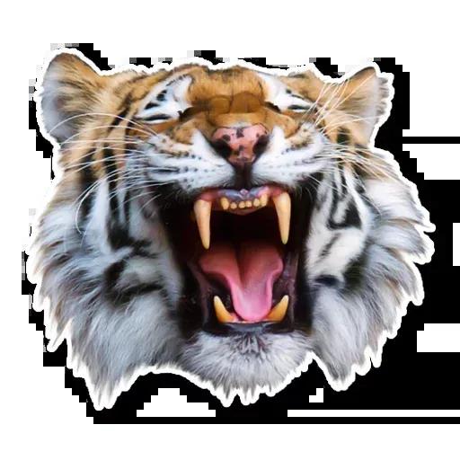 Tiger - Sticker 16