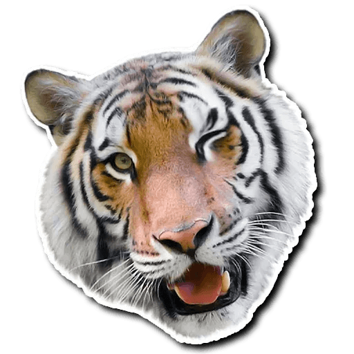Tiger - Sticker 14