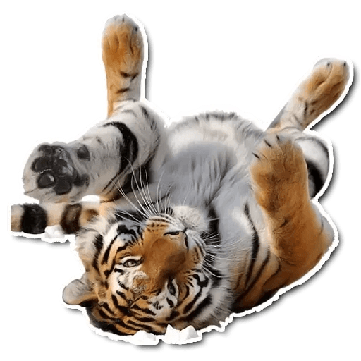 Tiger - Sticker 2