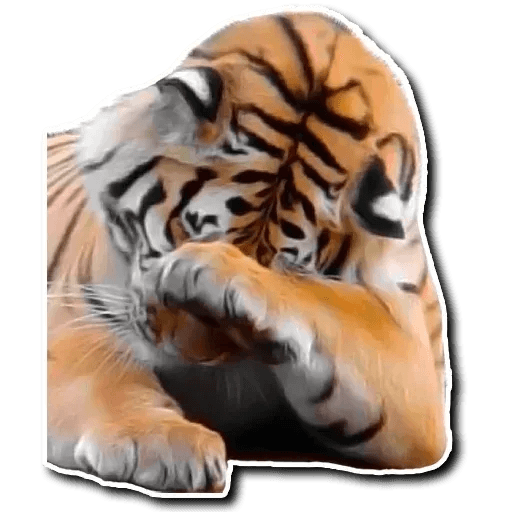 Tiger - Sticker 6