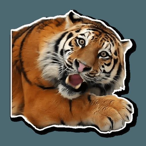 Tiger - Sticker 13