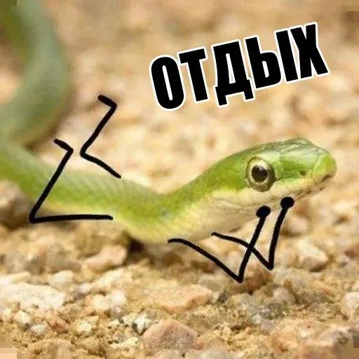 snake - Sticker 12