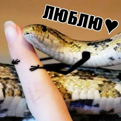 snake - Sticker 10