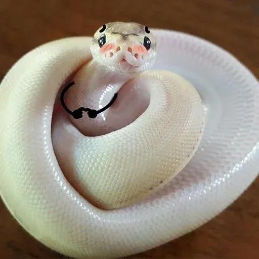 snake - Sticker 6