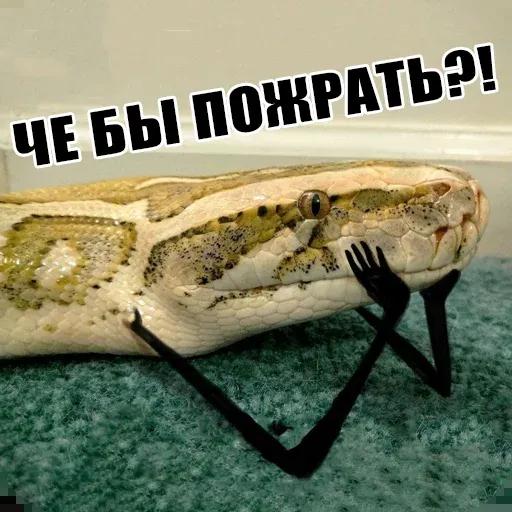 snake - Sticker 19