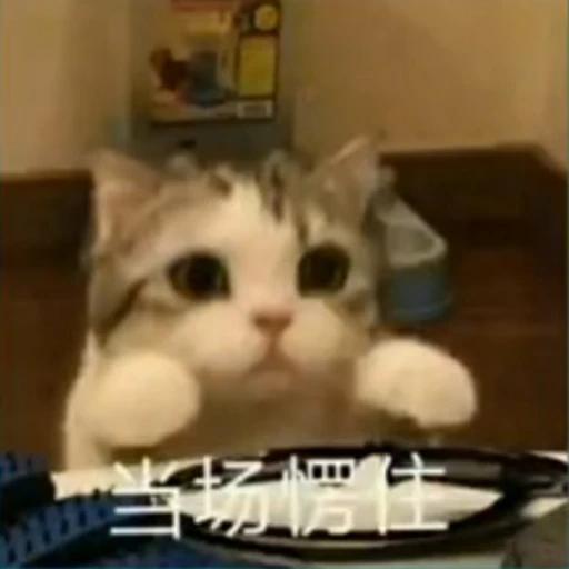 Cat - Sticker 13