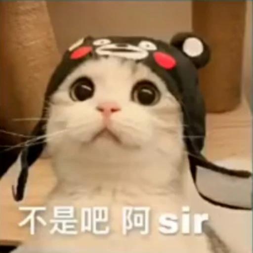 Cat - Sticker 11