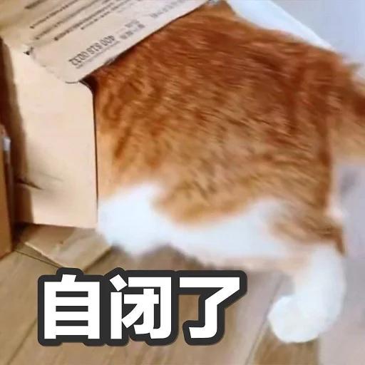 catttttt - Sticker 11