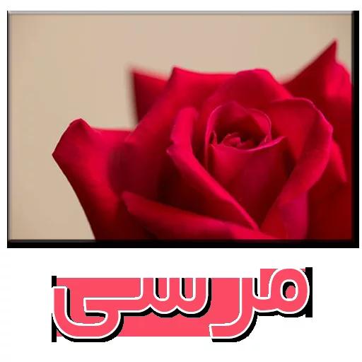 نوشته های گلی - Sticker 1