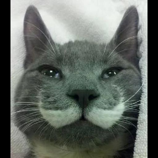 Cats - Sticker 24
